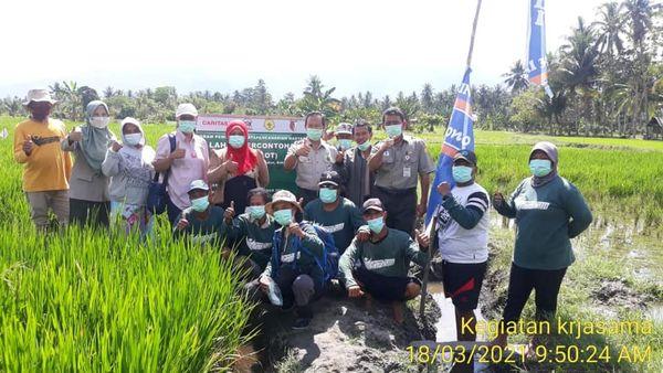 Kepala BPTP Sulawesi Tengah dan YPI Monitoring Demplot Padi dan Jagung